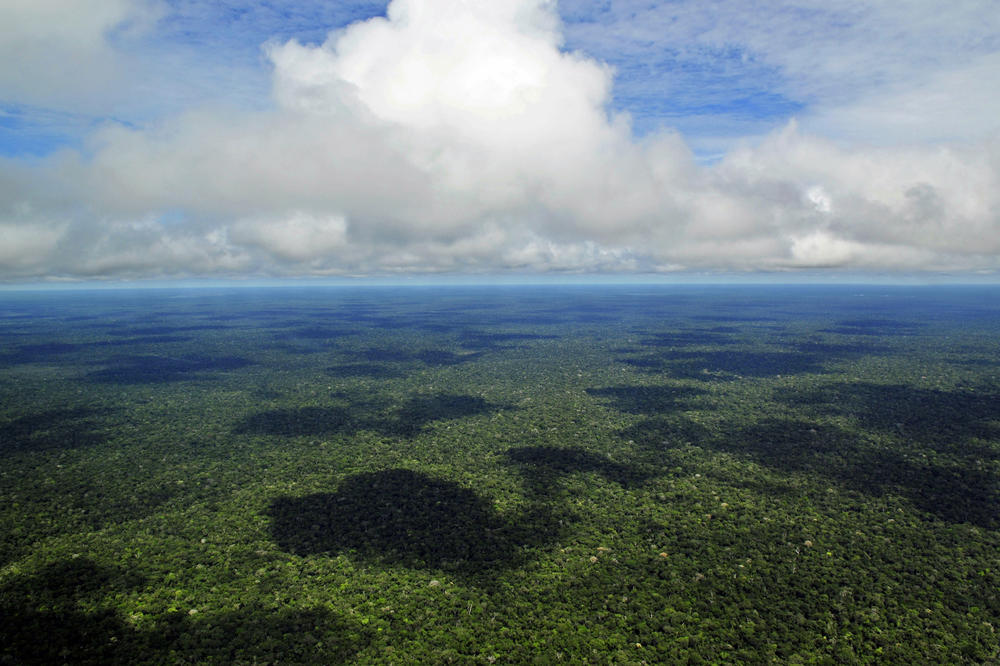 "As the Earth's ""green lung,"" the Brazilian rainforest absorbs large amounts of climate-damaging carbon dioxide through photosynthesis."