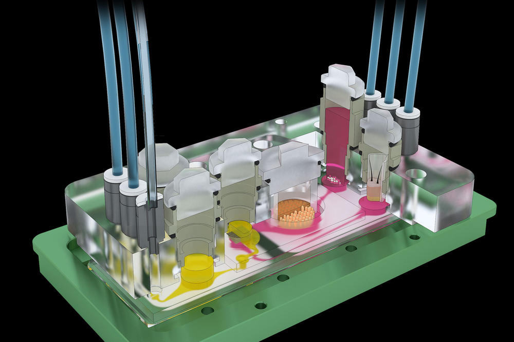 Cross-sectional model representation of the organ-on-a-chip technology.